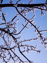 unnamed set (o6227) Tags: blue cyan snow lightblue sky skies tree branch amateur minimalism minimalistic