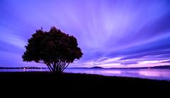 Long Ohinemutu Sunrise (ajecaldwell11) Tags: pohutakawa xe3 sunrise ankh purple dawn lakerotorua fujifilm light longexposure newzealand tree sky rotorua caldwell water clouds