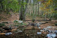 Promenade du Ninglinspo (cedant1) Tags: walk ninglinspo nikon nonceveux promenade water still colours fall rocks aywaille liège hike reflection forest wallonia wallonie belgium
