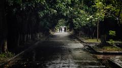 Sheltered (mrmeezoid) Tags: people umbrellas rain hue vietnam vanishingpoint road street citadel travel asia trees canopy tunnel kerb weather moody cool uncool uncool2 uncool3 uncool4 uncool5 uncool6 c1u7