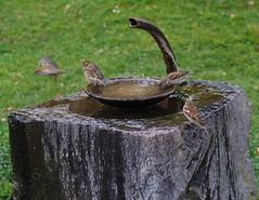 The essence of life (Baubec Izzet) Tags: baubecizzet pentax birds water nature flickrunitedaward