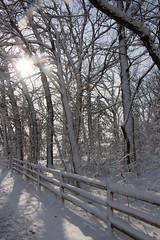 (Theresa Best) Tags: nature snow winter canon illinois canon760d canont6s canon8000d theresabest explorecreatewonder adventure fence sunflare sun flare
