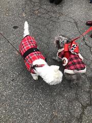 """Alexandria Scottish Christmas Walk 2018 • <a style=""""font-size:0.8em;"""" href=""""http://www.flickr.com/photos/117301827@N08/45264938475/"""" target=""""_blank"""">View on Flickr</a>"""