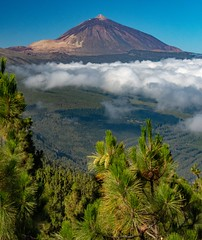 Pine Trees, Clouds and Mountain / Pinos, Nubes y Monataña (López Pablo) Tags: forest teide national park gfreen cloud mountain volcano sky blue nikon d7200