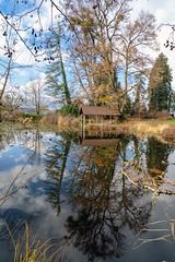 Lake Au (Bephep2010) Tags: 2018 7markiii alpha au auzh ausee bäume herbst ilce7m3 lakeau reflektion sel1635z schweiz sony switzerland wolken zurich zürich autumn clouds fall reflection trees ⍺7iii kantonzürich ch