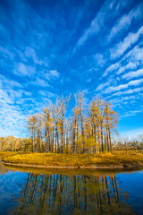 Bad Hair Day (stevenbulman44) Tags: cloud sky white blue canon 1740f40l polarizer park calgary alberta autumn fall