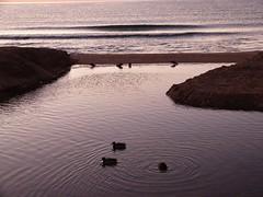 Primer amanecer 2019 (2) (calafellvalo) Tags: amaneceralbasolcalafellseaalbadasunrise amanecer sunrise amanecerdelaño2019 alba albada sea mar calafellvalo contraluz calafell aves gaviotas