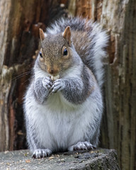 Squirrel (1) (Mal.Durbin Photography) Tags: wildlifephotography maldurbin naturephotography wildbirds forestfarm nature naturereserve