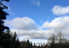 23/360: A Break in the Rain (jchants) Tags: 365the2019edition 3652019 day23365 23jan19 project365 sky clouds trees blue