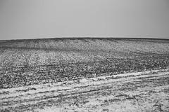 """stilte"" I (B.Graulus) Tags: photography landscape fotografie landschap huldenberg vlaanderen flanders belgië belgium monochrome fields snow sneeuw winter velden serene minimal canon blackandwhite"