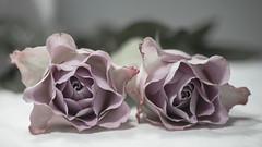 two roses (Redheadwondering) Tags: sonyα7ii 119picturesin2019 minolta100mmf28macrolens minolta stilllife flowers roses pink dxo dxofilmpack5 108unfurling 108