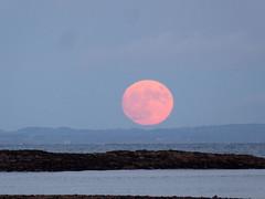 Moon from Whiting Bay (davidmcnuh) Tags: scotland arran whitingbay sandbraes beach moon sea ayrshire moonrise