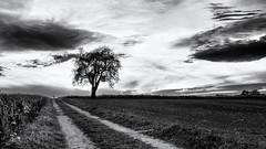 Going Home... (Ody on the mount) Tags: abendlicht anlässe bäume em5ii fototour himmel mzuiko2518 omd olympus pflanzen schwäbischealb silhouette sonnenuntergang weg wolken bw clouds evening monochrome sw sunset trees ways