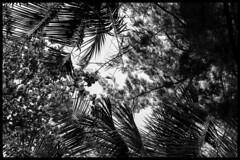 Ko Wai / Ко Вэй (dmilokt) Tags: природа nature пейзаж landscape море sea пальма palm небо sky облако cloud dmilokt чб bw черный белый black white