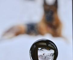 Zeke refracted (Karen McQuilkin) Tags: zeke refracted winter snow upside down