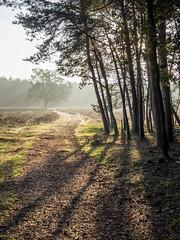 Bussumerheide 2018: Long shadows (mdiepraam) Tags: bussumerheide 2018 bussum westerheide heath earlymorning dawn sunrise tree branch backlight shadow