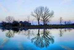 Lungo il fiume (Michelecimitan) Tags: michelecimitan riflessi alberi fiume acqua sile jesolo venezia veneto italia italie italy europe europa fleuve river eau water reflets reflections geotagged