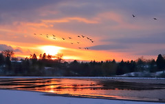 Sunset Journey (Daniel Q Huang) Tags: sunset ice lake snow hill birds inflight winter landscape waterscape