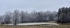 Winter Wonderland (phthaloblu) Tags: icestorm ice trees pond farmfield sky