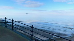 A winter's afternoon   Cromer   Offshore wind farm (rosberond) Tags: cromer norfolk seaside coast winter afternoon sea sky iphonexs gull