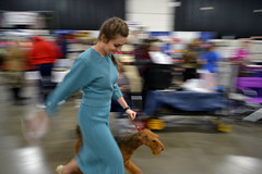 Terrier Run (timmerschester) Tags: dogs dog show lady colors competion terrier canine dress michigan