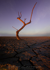 Solitario. (Fotografias Unai Larraya) Tags: paisajes yesa arido arboles texturas navarra naturaleza ngc amanecer
