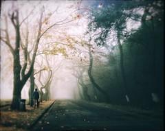 November (PattyK.) Tags: ioannina giannena giannina epirus ipiros balkans hellas ellada griechenland whereilive autumn november 2018 lakeside fog mist morning silhouette man road trees europe ιωάννινα γιάννενα γιάννινα ήπειροσ ελλάδα βαλκάνια ευρώπη δρόμοσ ηπόλημου φθινόπωρο νοέμβριοσ huaweip9 snapseed