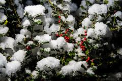 DMP_6976 (alohadave) Tags: autumn effects fall flash massachusetts night norfolkcounty northamerica overcast pentaxk3 places pocketwizardplusiii quincy season sigma1750mmf28exdchsm sky snowing southquincy sunpakauto26sr unitedstates wirelesstriggers