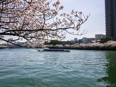 Boat and Flowers - Kema Sakuranomiya Park - Osaka (Noti NaBox) Tags: osaka sakura sakuranomiya river rivière park parc cherry cherryblossom cerisier fleur blossom japan japon