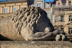 Guardian (Michal Zawolek) Tags: krakow kraków krakau cracow poland autumn fall city lion statue main square mainsquare market marketsquare landmark historical historic medieval stone building buildings architecture architectural