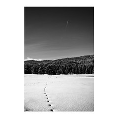 Snow tracks (Maria Zaharieva) Tags: blackandwhite black white bw monochrome mono contrast shadows highlights shadow land landscape forest forestlandscape pines nature winter snow cold trees treescape tracks steps mountain intothewild intothemountains wild sun sunlight explore observe travel adventure airplane bulgaria