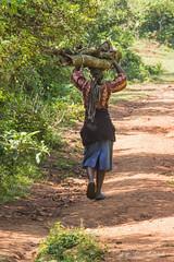 180919 Kakamega Forest National Reserve   -8472 (Serge Léonard) Tags: kakamegaforestnationalreservekenya kenya oiseaux transport avion continentafricain humain métier