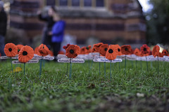 Crochet Poppies (Jonathan Goddard1) Tags: pentax k1 dfa50mmf14aw 50mm f14 remembrance armistice poppies 100thanniversary 19182018