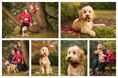 Millie, Jake and Alfie-3.jpg (___INFINITY___) Tags: 2018 6d aberdeen animal canon darrenwright dazza1040 dog eos family infinity pet portrait