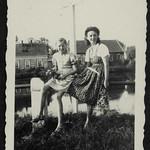 Archiv S331 Wiesenblumen, 1940er thumbnail