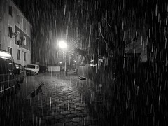 Night rain (wojciechpolewski) Tags: rainyweather rain nightrain rainynight nightstreet streetphotographer streetphoto streetphotography streetlights streetexploration explorestreets streetexplorer street streetview night nightphoto nightphotography beautifulnight nightlights atnight blacknwhite blackandwhite bw bnw monochromatic monochromatico monotone monochrome wpolewski poland kedzierzynkozle urban urbexexploration urbanexplorer