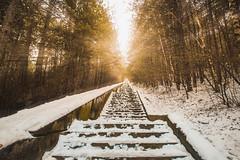 Towards the sun... (Hasan Yuzeir 📷) Tags: towards sun sunshine light forest nature hasanyuzeir canon 1300d stairs