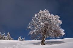 Mon pote le hêtre (mrieffly) Tags: als htrhin hautesvosges colduhaag geishouse neige chaumesvosgiennes hiver givre canoneos50d