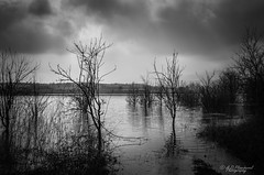 Post-diluvian (Through_Urizen) Tags: category hdr inegol karadere landscape places turkey canon1585mm canon canon70d outdoor outside mono monochrome blackandwhite whiteandblack bw waves ripples water lake reservoir trees clouds cloudysky travelphotography landscapephotography