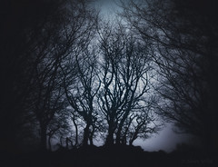 By the Old Farmstead (shawn~white) Tags: fujifilmxt10 hawthorn nik alteredstate blue boundary cold colours cool dark dramatic dreamy enchanting energy magical melancholy mystical nostalgia tree trees vintage winter ©shawnwhite