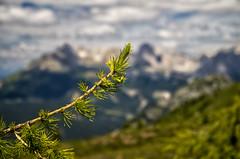 Boked Rosengarten (alberto.forti) Tags: dolomites mountain tree rosengarten catinaccio fassa focus bokeh