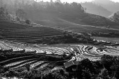 Sapa Trekking (rbrands) Tags: wandern wanderung schwarzweis blackwhite sapa vietnam vn