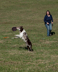SZP_1336_pslr5 (Lakeside Annie) Tags: 11102018 2018 20181110 24120mm 24120mmf40 70300mm 70300mmf4556 d750 fall huntersville huntersvillenc leannefzaras nc nikkor nikkor24120mmf40 nikkor70300mmf4556 nikkorlens nikon nikond750 northcarolina november10 ruralhill sarazphotography saturday sheepdog sheepherdingtrials dog dogfestival frisbee frisbeedog shepherd trick trickdog
