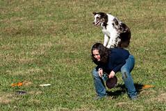 SZP_1348_pslr5 (Lakeside Annie) Tags: 11102018 2018 20181110 24120mm 24120mmf40 70300mm 70300mmf4556 d750 fall huntersville huntersvillenc leannefzaras nc nikkor nikkor24120mmf40 nikkor70300mmf4556 nikkorlens nikon nikond750 northcarolina november10 ruralhill sarazphotography saturday sheepdog sheepherdingtrials dog dogfestival frisbee frisbeedog shepherd trick trickdog