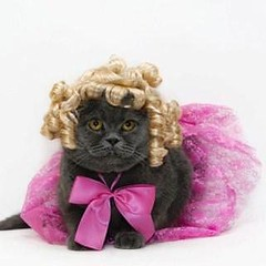 Funny Cats Wearing Clothes (olga_00022) Tags: clothes funnycats humans wearing