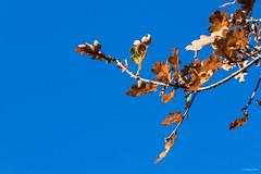 Automne 2018 / Parc de Woluwé (Philippe Clabots (#PhilippeCPhoto)) Tags: philippecphoto nature automne autumn belgie belgique belgium brussel brussels bruxelles natyre oiseaux parc parcdewoluwe philippec saison season woluwe
