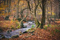 Parc Natural del Montseny - Can Casades (raidtxujones) Tags: montseny barcelona park nature autumn footpath leafs fall nikond7200 nikon madewithluminar