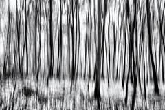 Too much Wine in the Woods... (Ody on the mount) Tags: abstrakt anlässe bäume em5ii fototour kunst mzuiko918 omd olympus pflanzen schwäbischealb wald abstract art bw forest icm monochrome sw woods