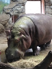 """china-zoo-2014-photo-jul-08-10-08-42-pm_14644384361_o_41390621255_o • <a style=""""font-size:0.8em;"""" href=""""http://www.flickr.com/photos/109120354@N07/44362158910/"""" target=""""_blank"""">View on Flickr</a>"""