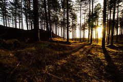 Shadows (mlomax1) Tags: wales ynysmom anglesey cloud island canoneos80d outdoor canon sky cymru newboroughforest forest trees sun grass shadows